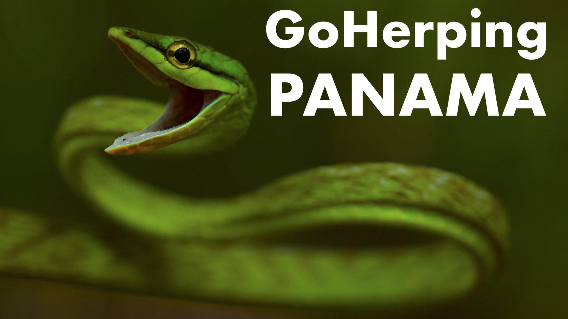 Le travail de terrain d'un biologiste au Panama